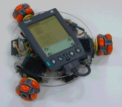 kit03_palm